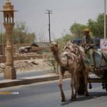 Jaisalmer, aux portes du désert du Thar