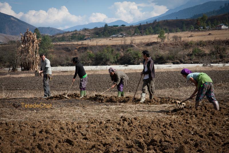 moi_beche_tibetains_mechuka