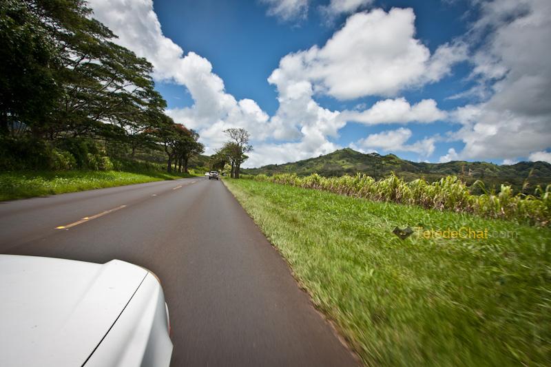 voiture_kauai