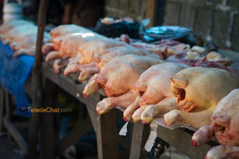 ligne_poulet_champhai