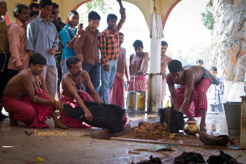 Udaipur_Matabari_bouc_sacrifice_5