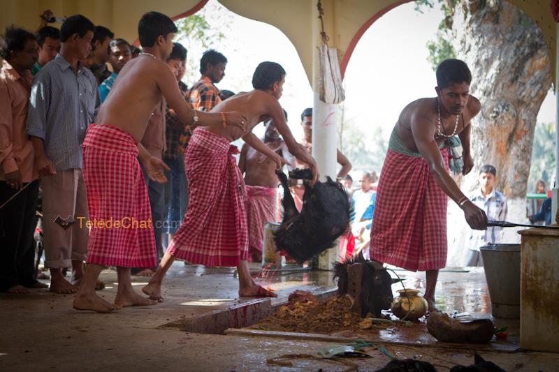Udaipur_Matabari_bouc_sacrifice_7
