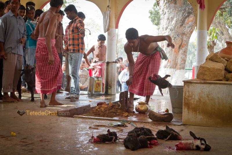 Udaipur_Matabari_chevre_sacrifice_13