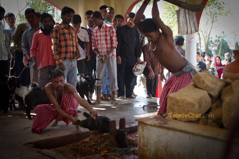 Udaipur_Matabari_chevre_sacrifice_7