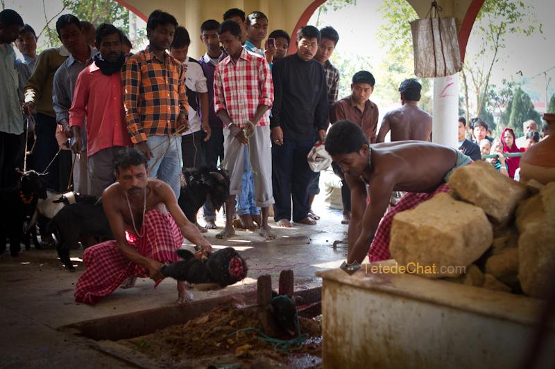 Udaipur_Matabari_chevre_sacrifice_8