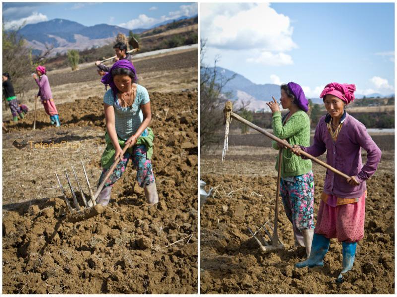 mechuka_tibetaines_champs