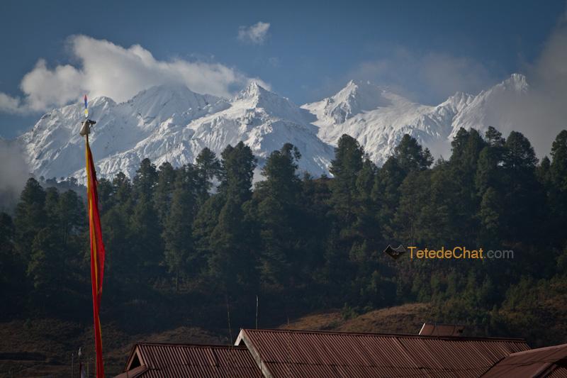montagnes_mechuka_arbre