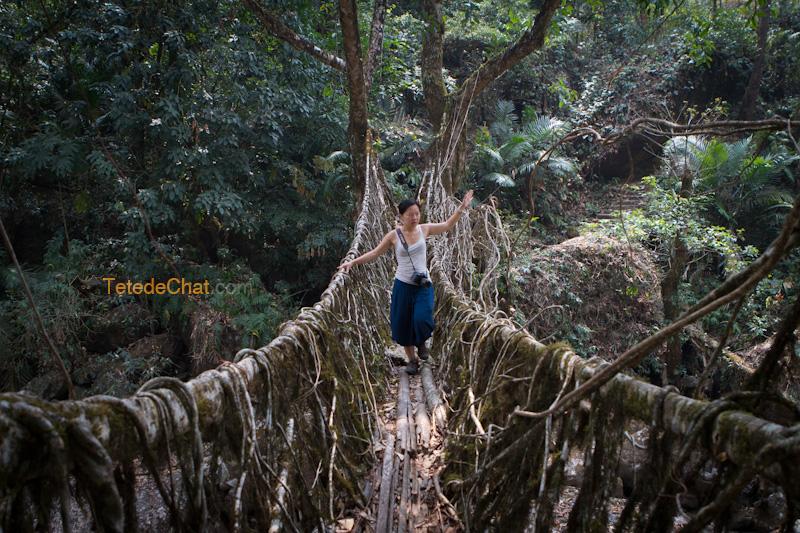 nongriat_pont_racine_arbre_4_hihi
