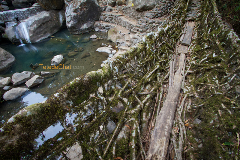 pont_racine_arbre_nongriat_3
