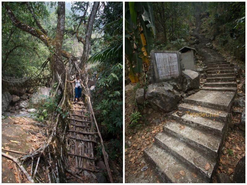 pont_racine_arbre_nongriat_escaliers