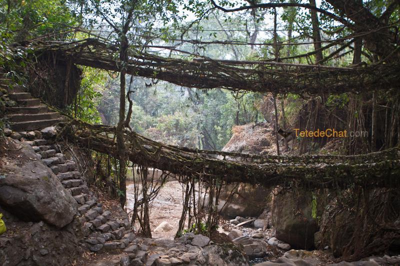 pont_vivant_racines_nongriat_double_deck_6