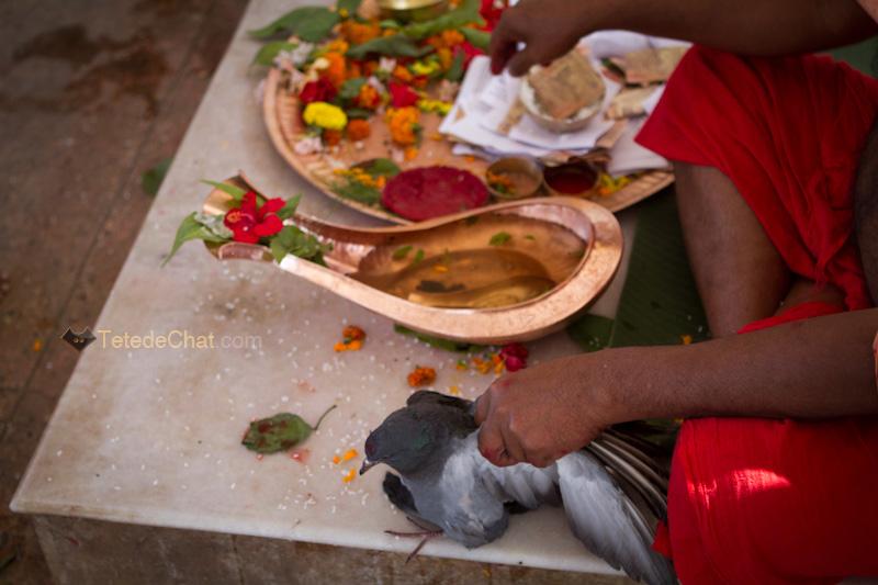 rituels_tripura_sundari_temple_9