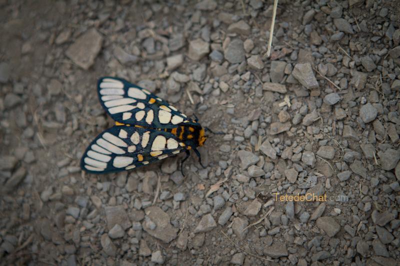 shangnyu_village_papillon