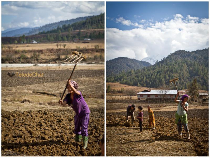 tibetaines_travail_mechuka