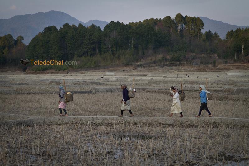 ziro_apatani_tribu_femmes_champs