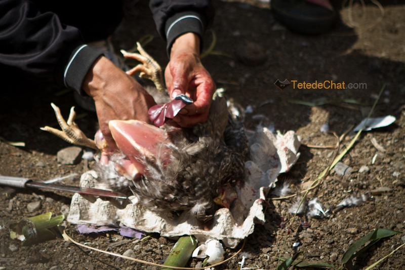 ziro_apatani_tribu_foie_poulet