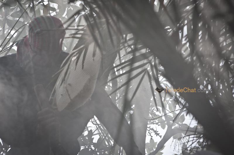 IMfumee_chasseur_miel_sundarban_bangladesh_4