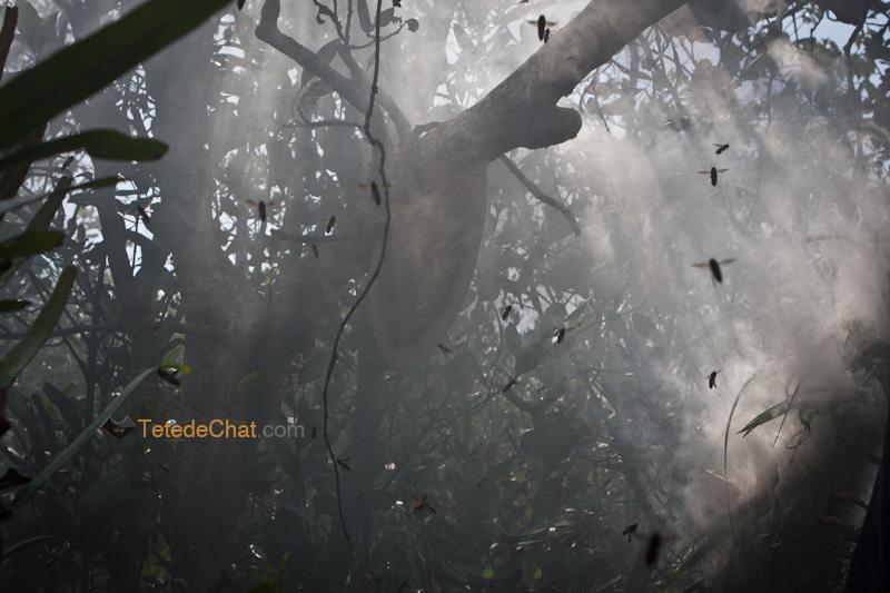 abeilles_sundarbans_bangladesh_fumee