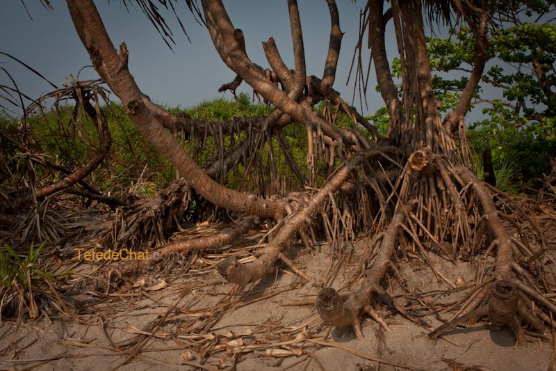 arbres_st_martin_bangladesh