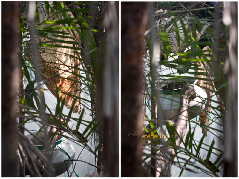 essaim_abeilles_bangladesh_fumee_sundarban