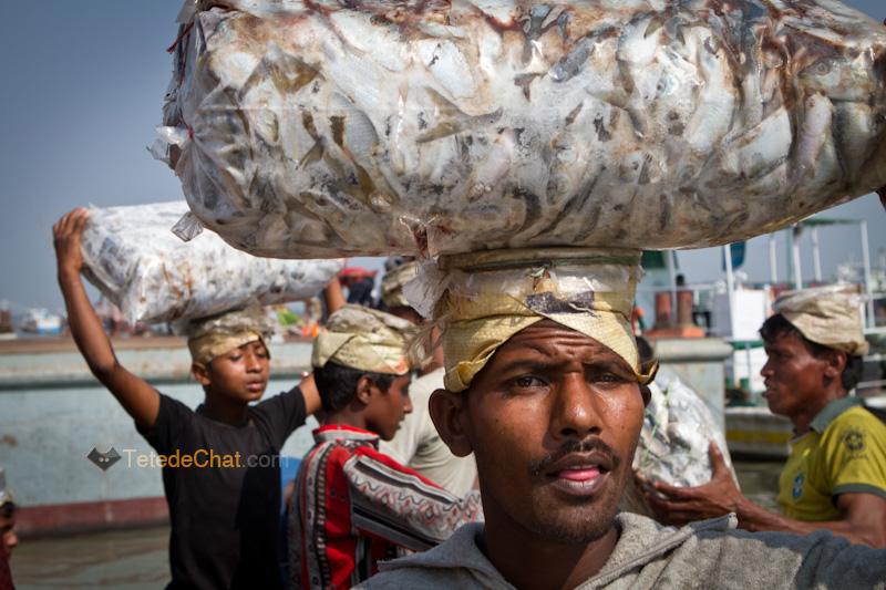 livreur_poissons_chittagong_portrait_3