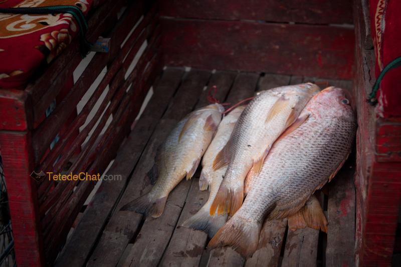 peche_poisson_st_martin_bangladesh
