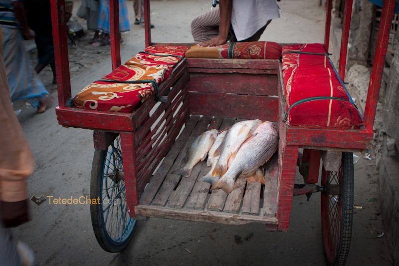poissons_tuk_tuk_st_martin_bangladesh