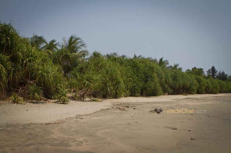 vegetation_st_martin_bangladesh
