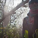 Les chasseurs de miel des Sundarbans