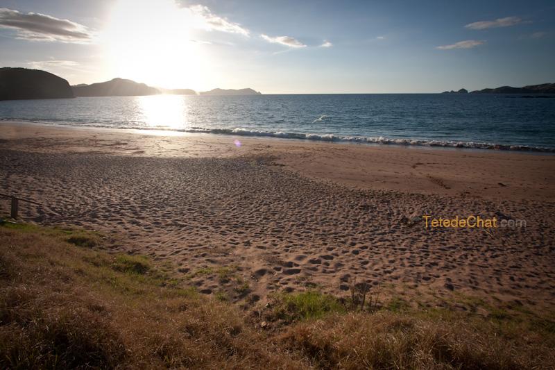 paysage_nouvelle_zelande_nord_soleil
