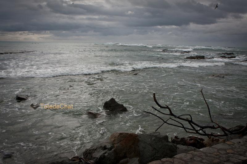 ocean_kaikoura