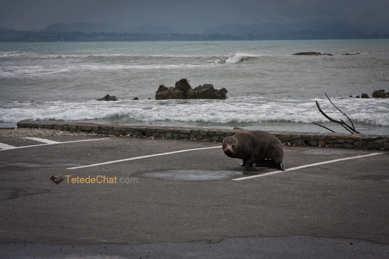 phoque_kaikoura_parking