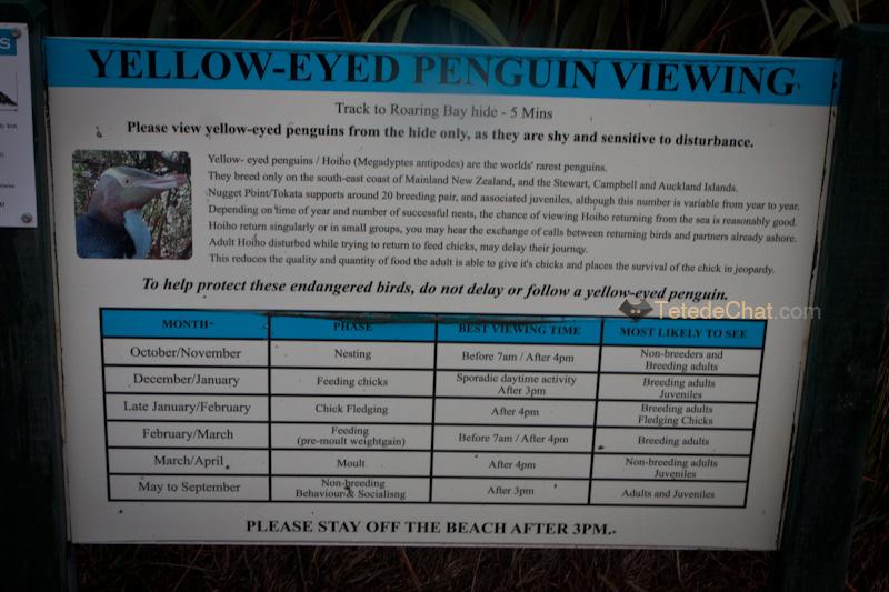 pingouins_baie_roaring_nugget_3
