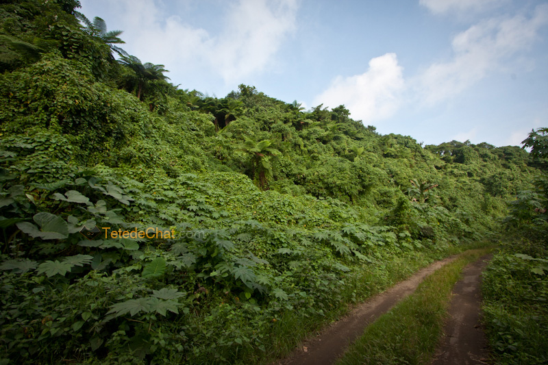 chemin_port_resolution_tanna