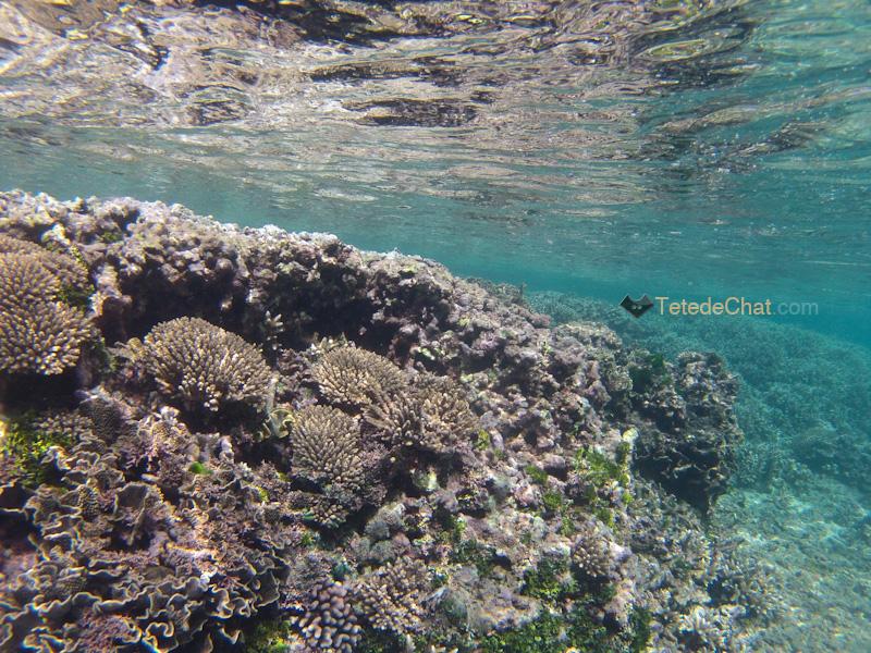 coraux_white_beach_tanna