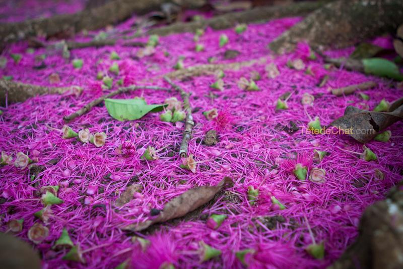 sol_ fleurs_arbre_espiritu_santo