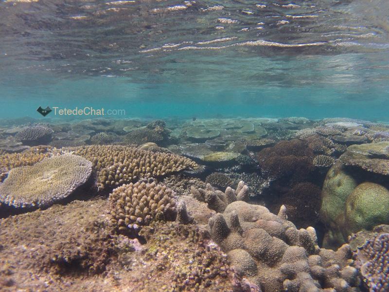 archipel_yasawa_fidji_coraux
