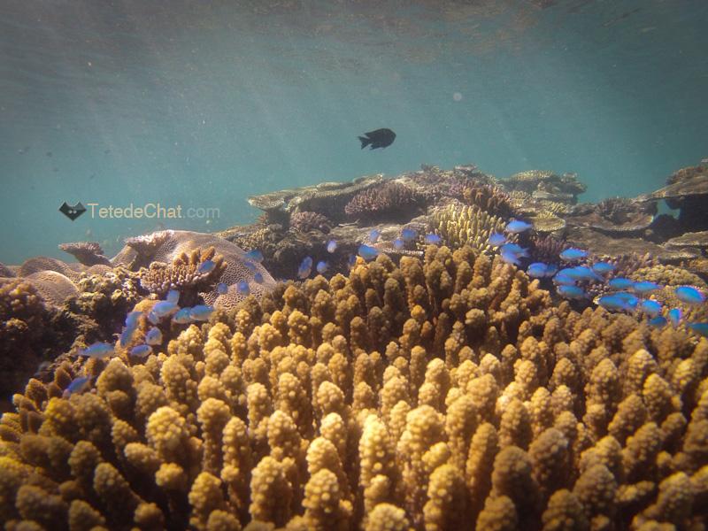 archipel_yasawa_fidji_coraux_3