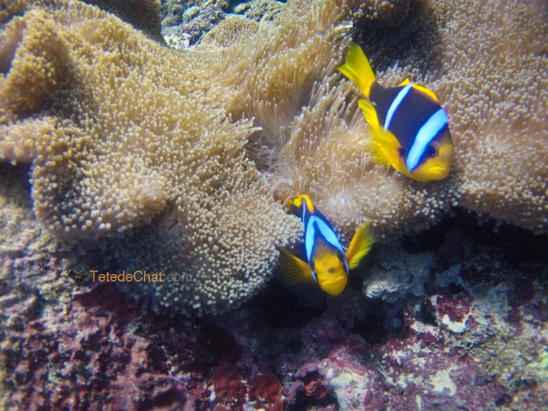 archipel_yasawa_fidji_coraux_poisson_clown