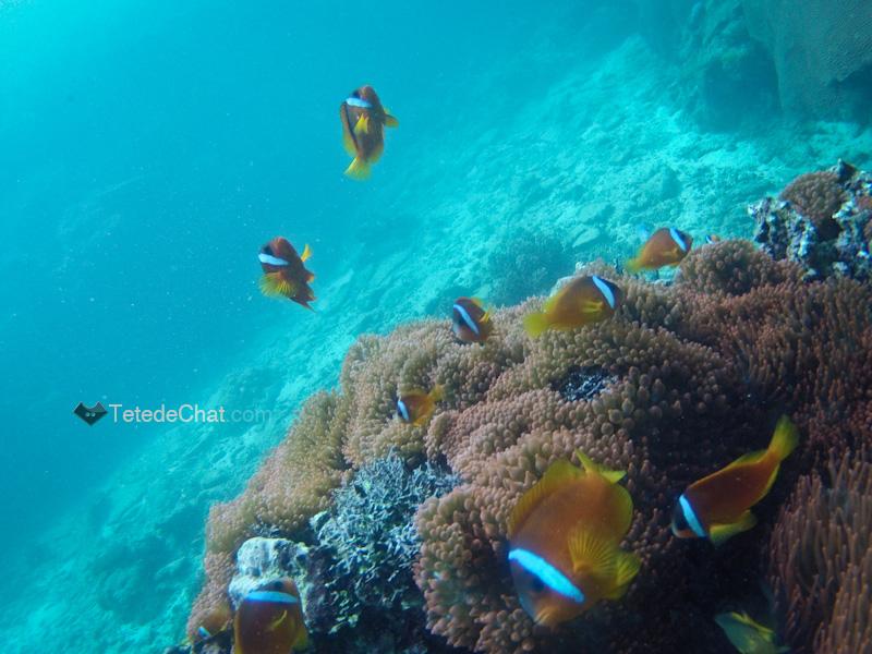 archipel_yasawa_fidji_coraux_poisson_clown_groupe_3