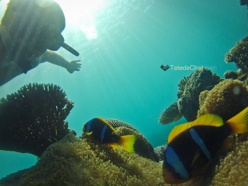archipel_yasawa_fidji_coraux_poisson_clown_moi