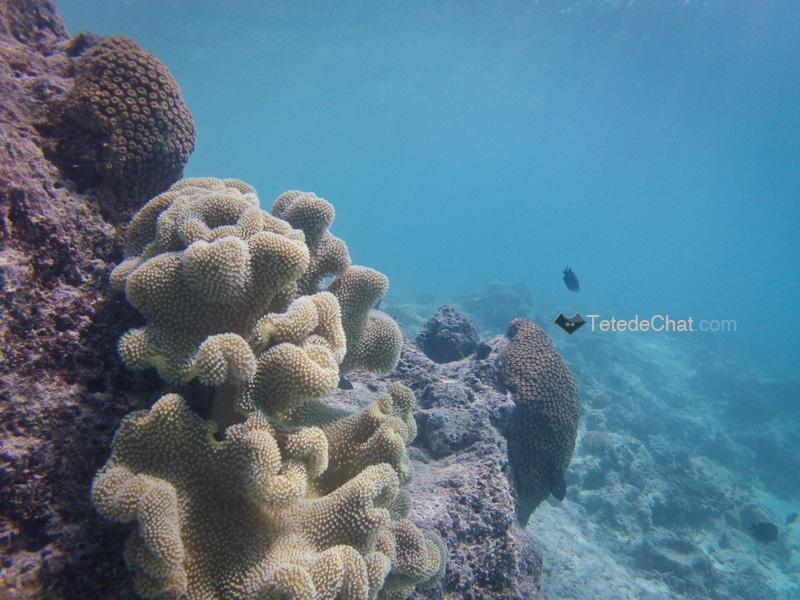 coraux_mamanuca