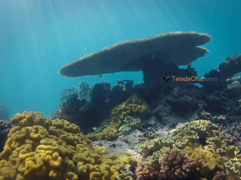 coraux_mamanuca_3