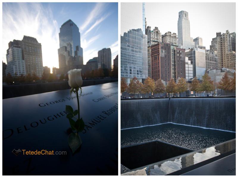 9_11_memorial_rose