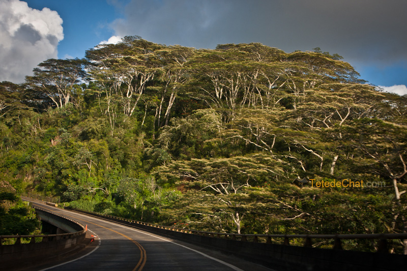 kauai_sur_la_route