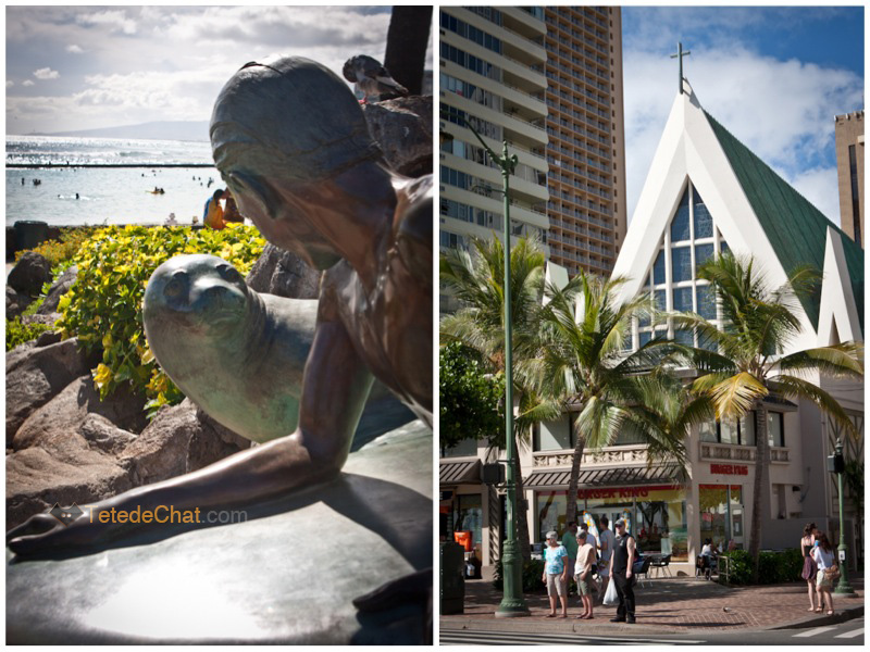 phoque_surfeur_eglise_honolulu