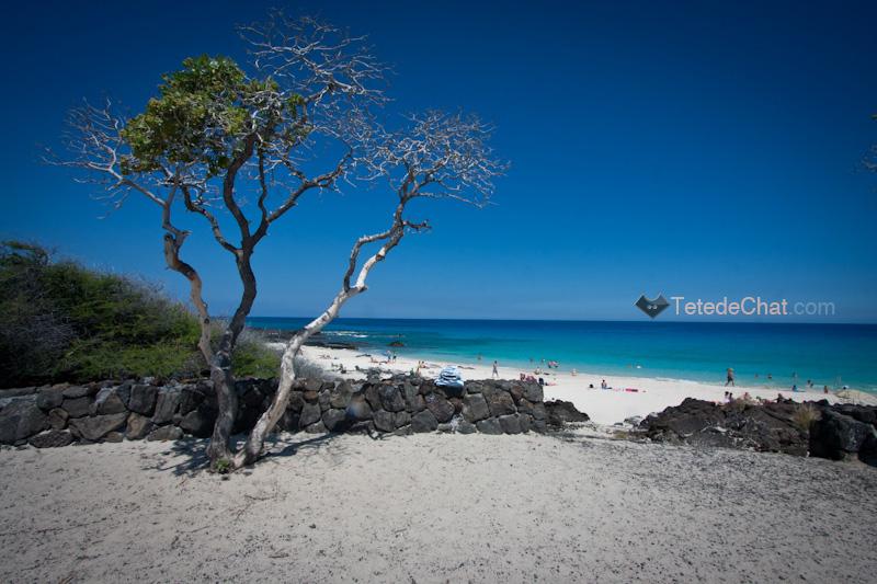 volcanique_plage_grande_ile_hawai