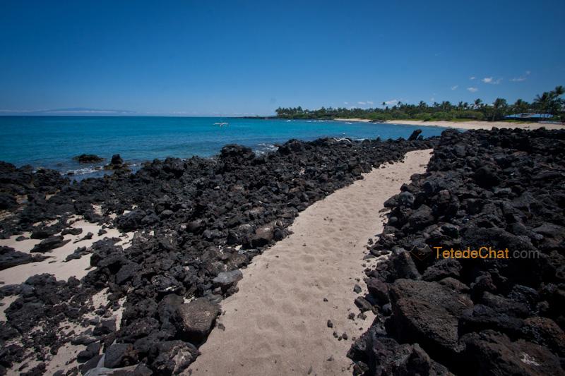 volcanique_plage_grande_ile_hawai_4