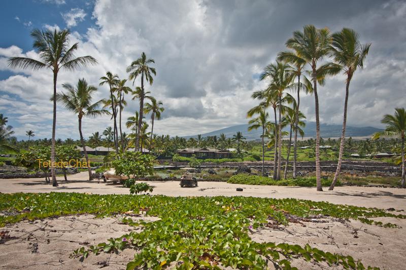 volcanique_plage_grande_ile_hawai_5