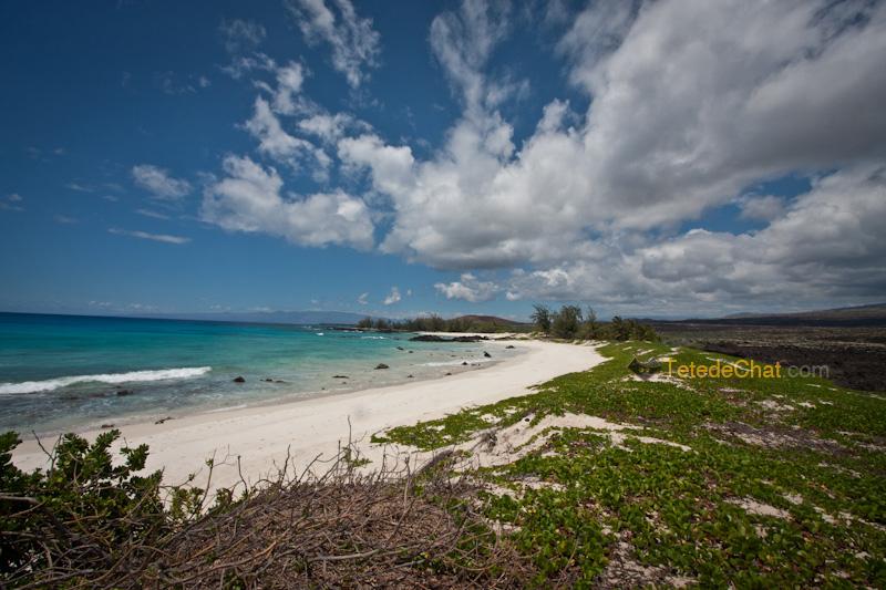 volcanique_plage_grande_ile_hawai_7